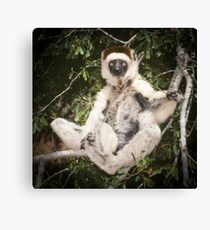 The sifaka will see you now Canvas Print