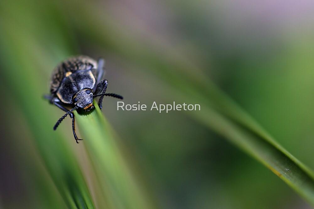 A walk on the wild side... by Rosie Appleton