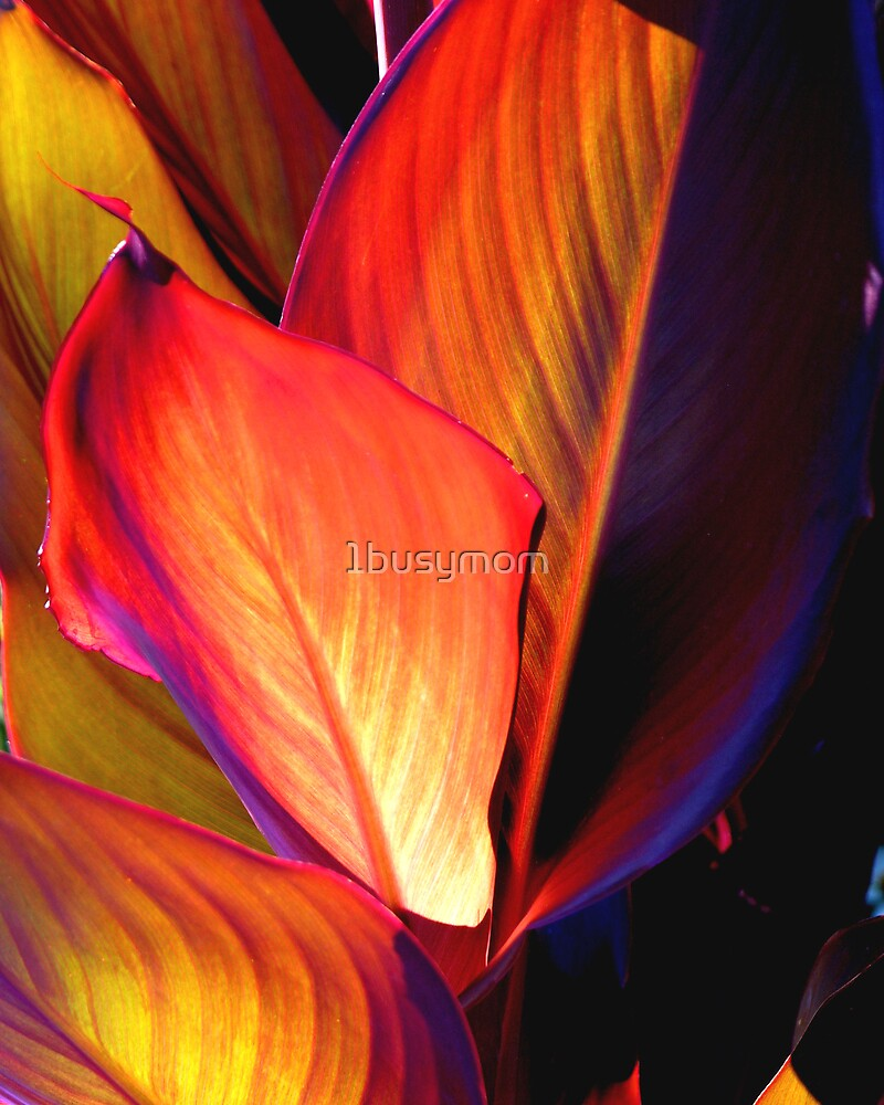 seemingly painted leaves by 1busymom