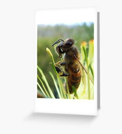 Grevvillea flower with bee - Serpentine Dam, Western Australia Greeting Card
