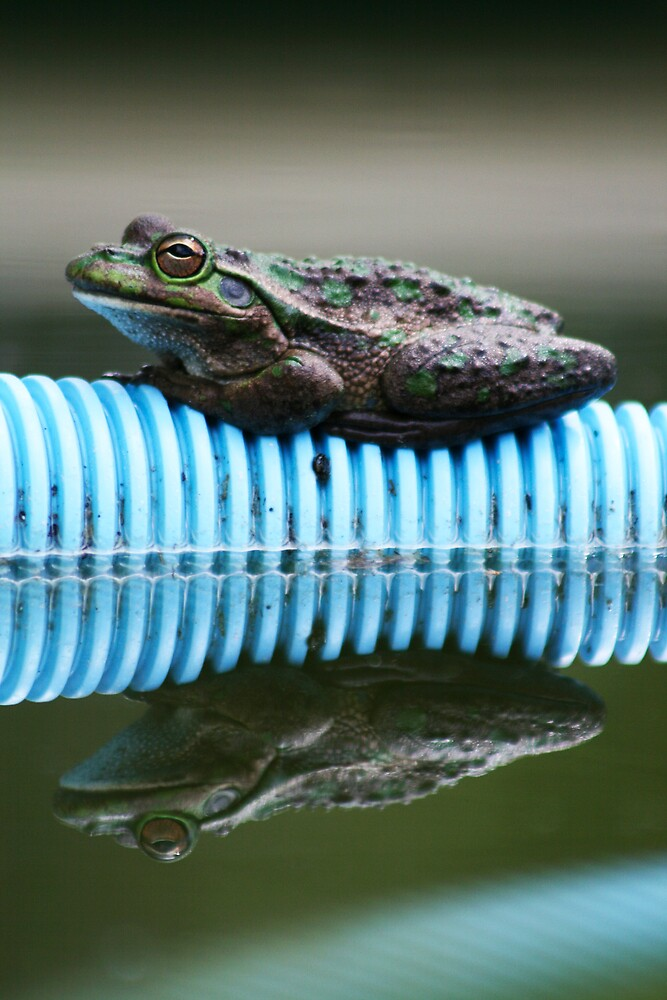 frogZ by Nix76