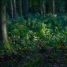 Forest Deep by Ann Garrett