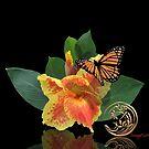 Canna Lily und Monarchfalter auf Schwarzem von Irisangel