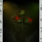 Red Roses & Grass by scarletjames