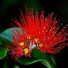 Summer Flower by UncaDeej