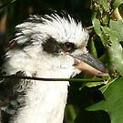 Kookaburra by Christine Jones