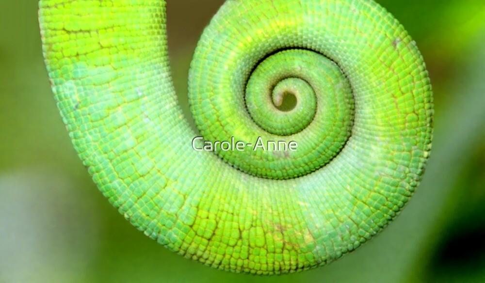Spiral, Madagascar by Carole-Anne