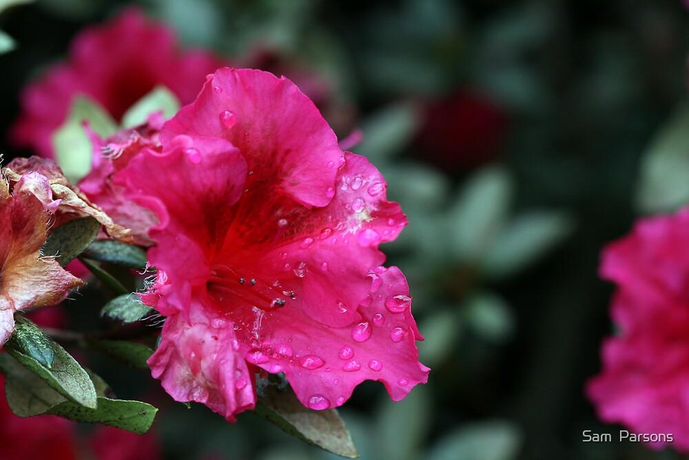 Flower by Sam  Parsons