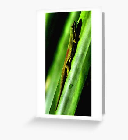 Day Gecko, Madagascar Greeting Card