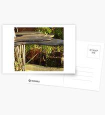 Uni Fountain Postcards