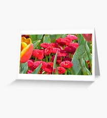Undergrowth Greeting Card