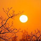 Orange Lust by carlos reynosa