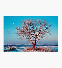 Moon over Winter Tree Photographic Print