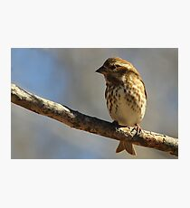 Female House Finch Photographic Print
