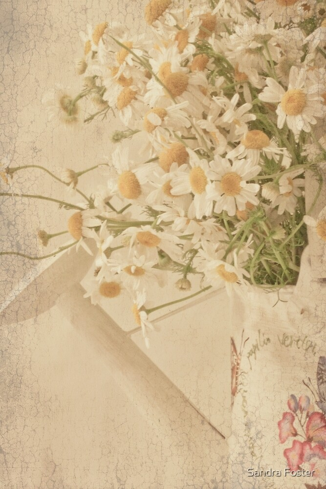 Wild Daisies In Watering Can by Sandra Foster