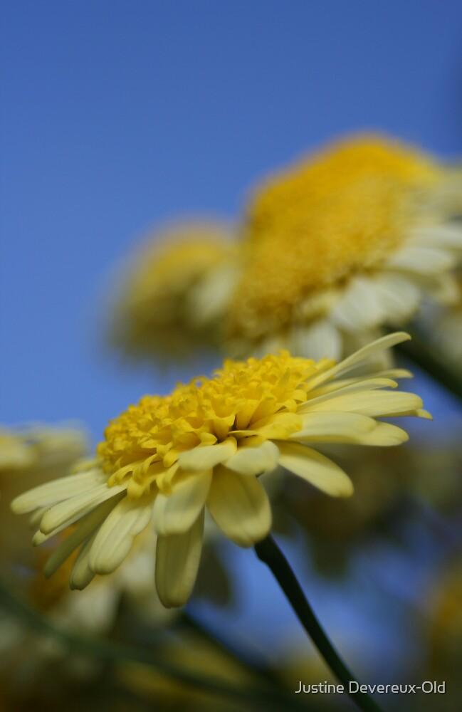 sunshine flowers by Justine Devereux-Old