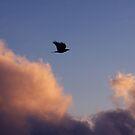 Flying  Purple Haze by carlos reynosa