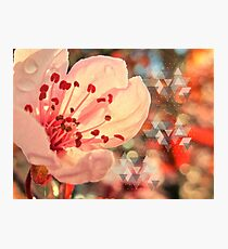 Early Morning Cherry Blossom Photographic Print
