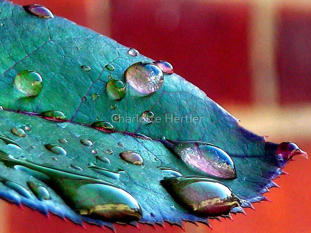 Raindrops and Reflections by Charlotte Hertler