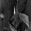 Bark Monochrome on Stinson Brook by Wayne King