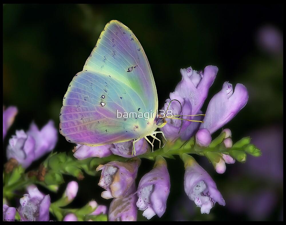 Butterfly Dreams 67 by bamagirl38