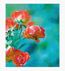 I never promised you a rose garden Photographic Print