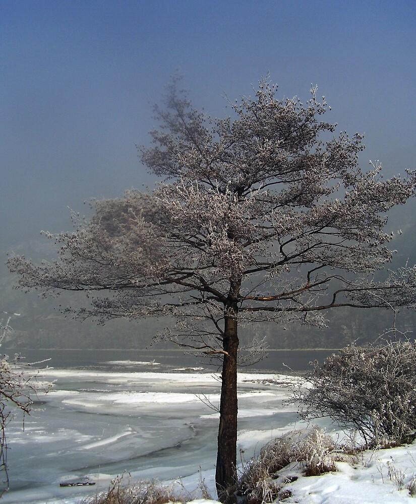 Bulgarian Winter (!) by tonymm6491