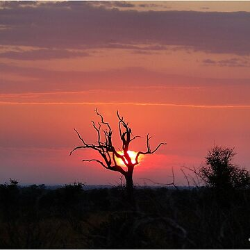 SATARA SUNSET IN THE KRUGER NATIONAL PARK by mags