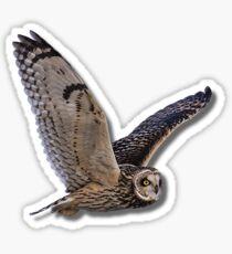 Beautiful Owl Raptor Flight Bird of Prey Birding Birder Gift T-Shirt Sticker