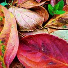 AutumnSaturation III by João Pereira