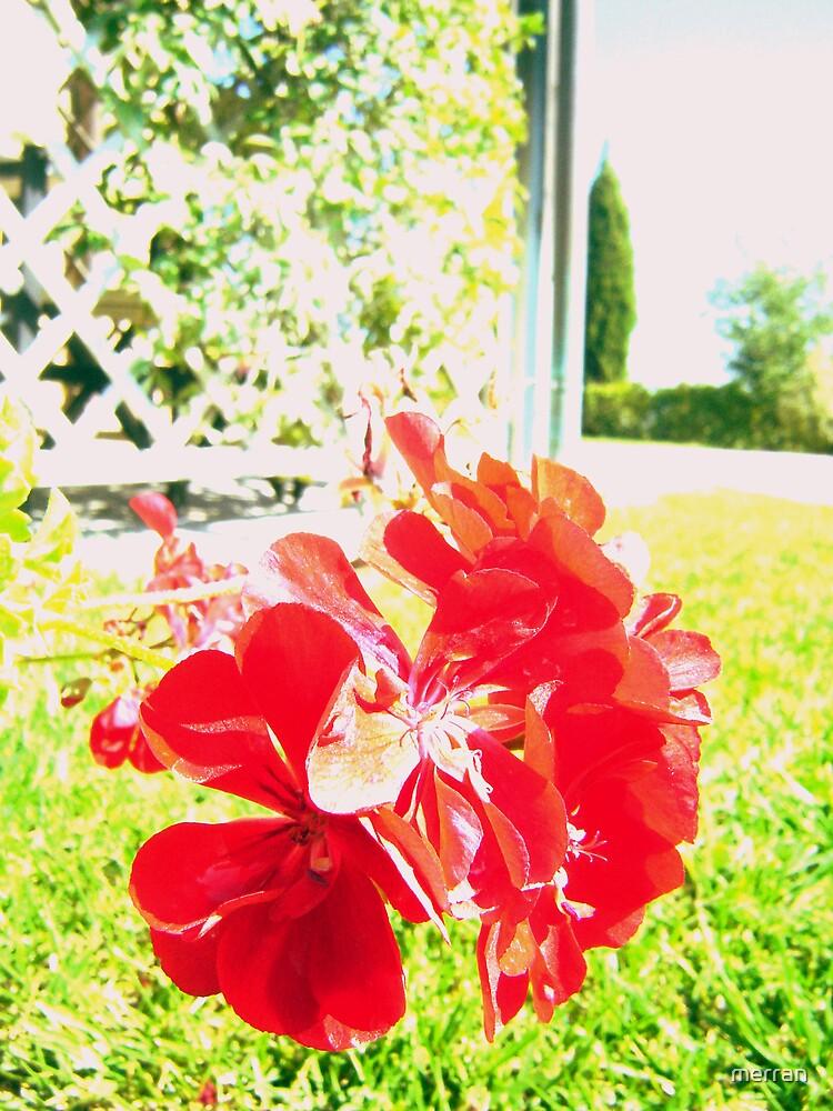Red Flower by merran