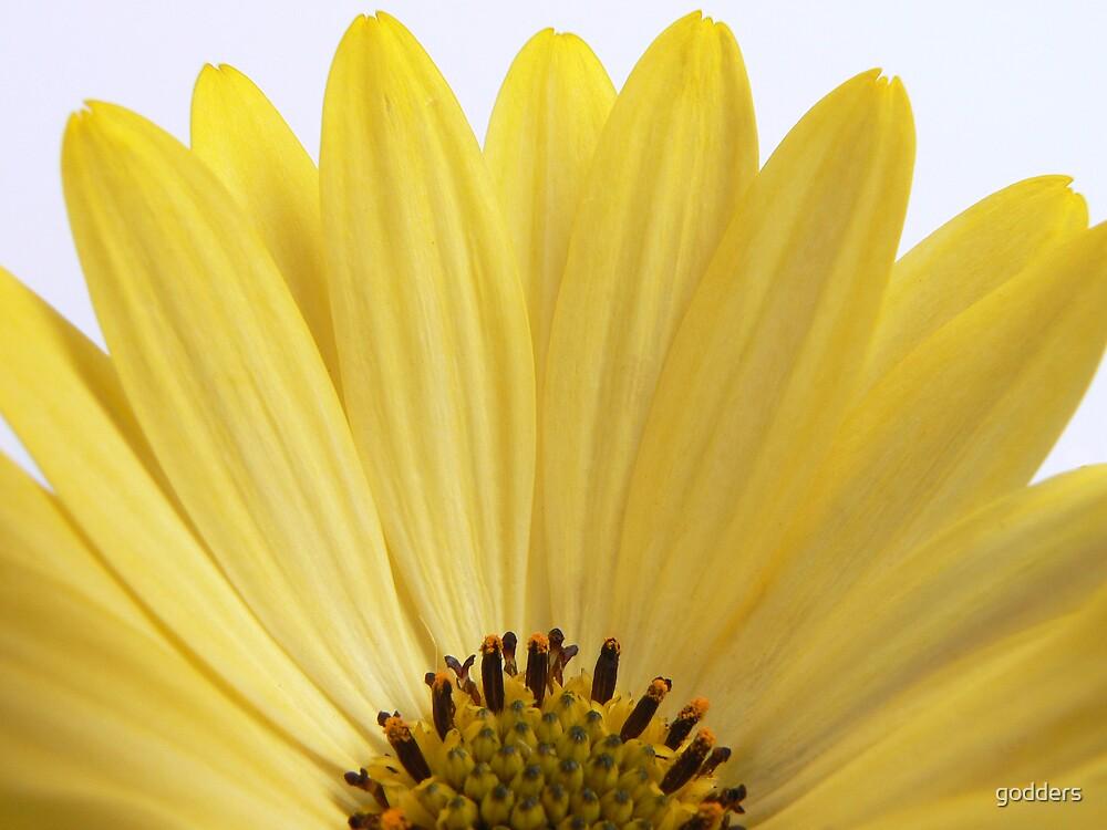 Sunshine ...... by godders