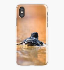 green turtle after hatching on their first voyage to the Mediterranean Sea wading in the shallow water.  iPhone Case/Skin