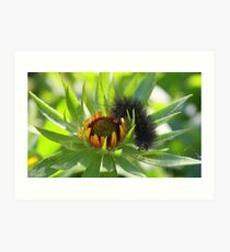 The very hungry caterpillar Art Print