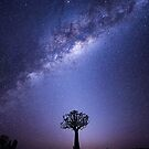The Zodiacal Glow by Mieke Boynton