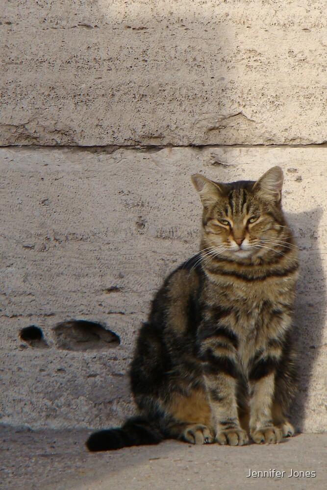 Colosseum Kitty by Jennifer Jones