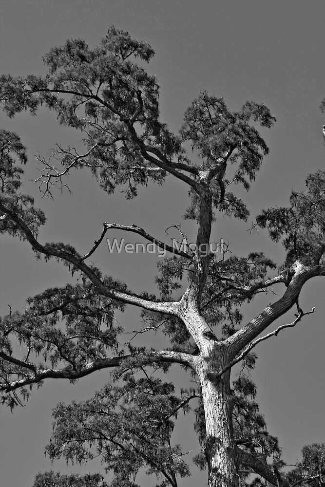 Tree in Black and White by Wendy Mogul