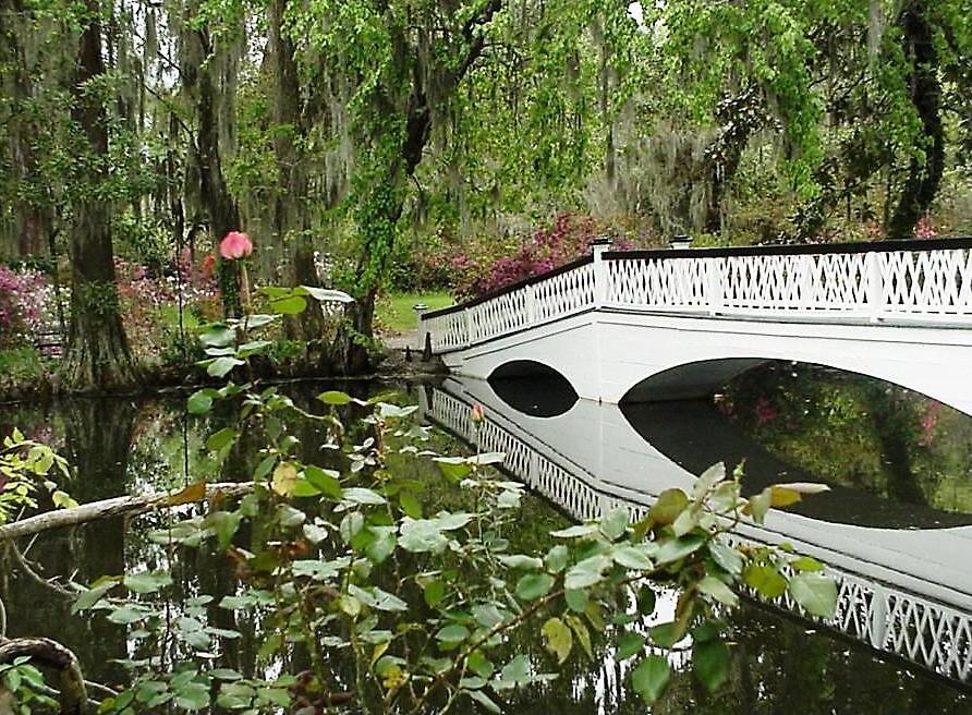 Magnolia Bridge by Braedene