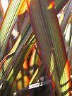 Grass Colour by Heidi Schwandt Garner
