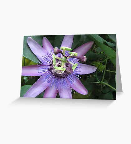 Masterpiece of Nature Greeting Card