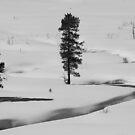 Snowy Path by Kathi Huff