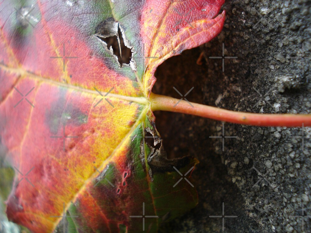 Leaf on Rock by JRobinWhitley