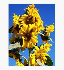 Sunflower Tower Photographic Print