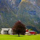 Norwegian Farm by ROSE DEWHURST