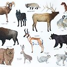 Mammals of Yellowstone National Park by Holly Faulkner