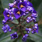 Purple Hearts by saharabelle