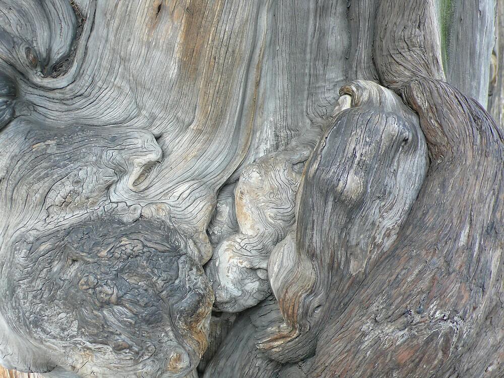 Beautiful bark by bluemobi