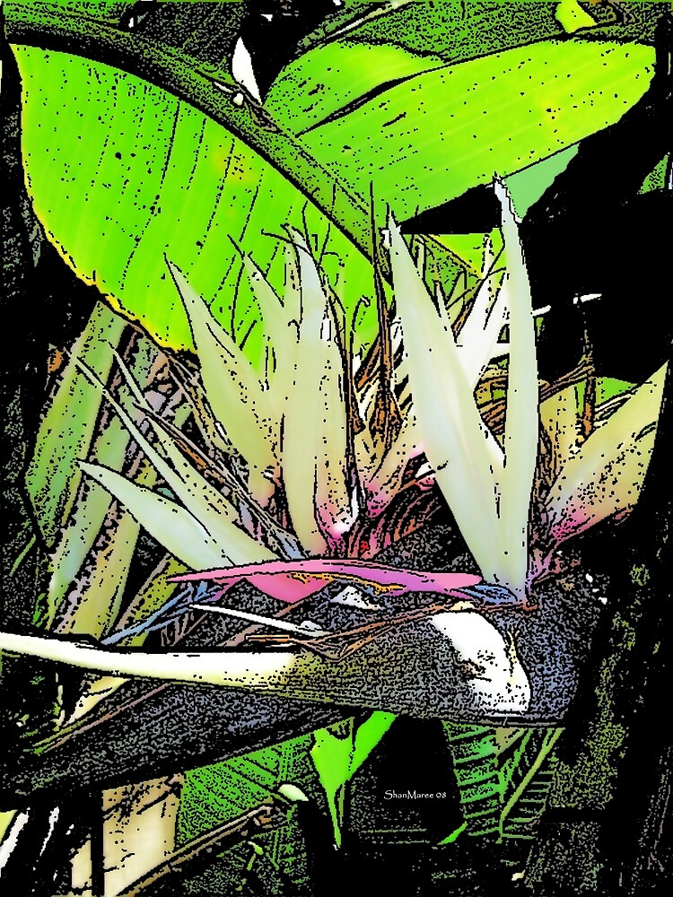 Floral art bird of paradise by shanmaree by william ballester