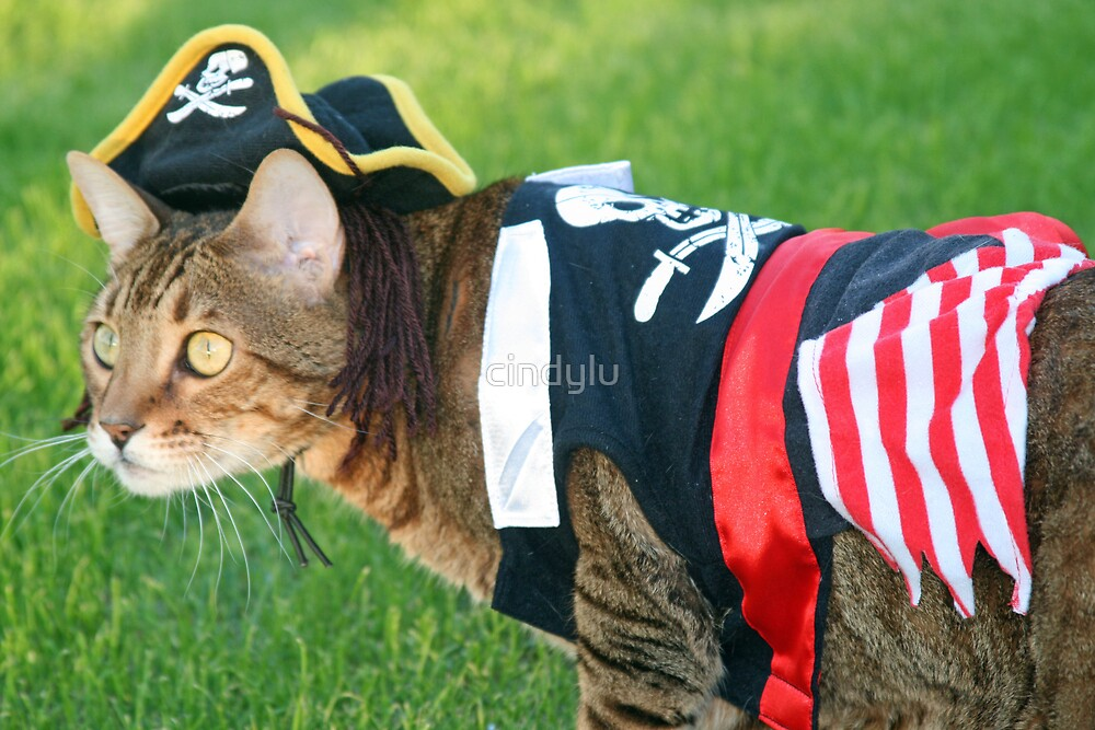 IT'S A PIRATES LIFE FOR ME!! by cindylu