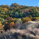 Colored Lake Michigan Dune by Kathilee